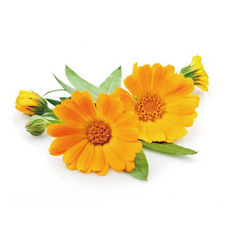 카렌듈라 워터(Calendular Flower Water)